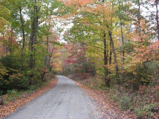 Country road in North Carolina